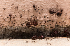 Beware crowd big ant,  they lived in the home.  Royalty Free Stock Photos