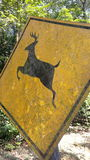 Beware of deer signboard Stock Photo