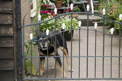 Beware do cão Imagens de Stock Royalty Free