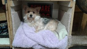 Beware of dog royalty free stock photos