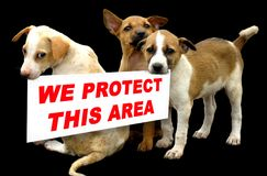 Beware of dogs. Dogs say's we protect this house royalty free stock photos