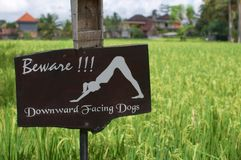 Beware of downward facing dogs` signage stock photo