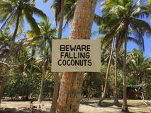 Beware of Falling Coconuts Pacific Ocean Royalty Free Stock Photos