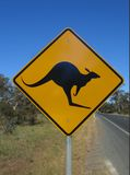 Beware of kangaroo stock photography