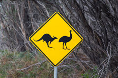 Beware of Kangaroos and Emus. Road sign warning of kangaroos and Emus Stock Image