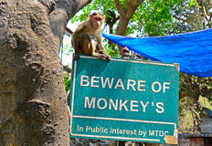 Beware Of Monkey's Royalty Free Stock Photos