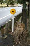 Beware os deers assinam dentro Nara, Japão imagens de stock royalty free