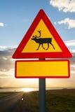 Beware of reindeers Royalty Free Stock Images