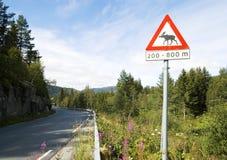 Beware van Amerikaanse elanden Royalty-vrije Stock Foto's