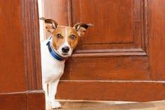 Beware van Hond royalty-vrije stock foto