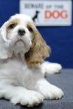 Beware van puppy royalty-vrije stock foto