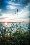 Sunset at the lake. Close up of a grass on the shore stock image