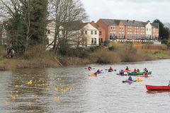 Bewdley-newyears-Tag-Ente-Rennen Stockfotos