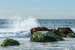 Bewegen Sie bei Ebbe das Brechen auf den Felsen wellenartig, die mit Eelgrass im Laguna Beach, Kalifornien bedeckt werden Stockfotografie