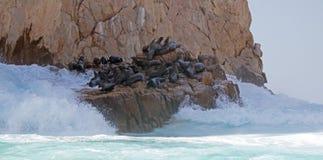 Bewegen Sie das Brechen über der Seelöwenkolonie an den Ländern beenden in Cabo San Lucas Baja Mexiko wellenartig Stockfotos