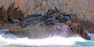 Bewegen Sie das Brechen auf der Seelöwenkolonie an den Ländern beenden in Cabo San Lucas Baja Mexiko wellenartig Lizenzfreie Stockfotos