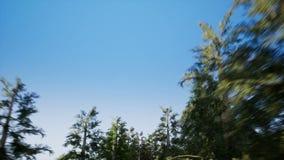 Bewegen Sie sich durch den Wald stock footage