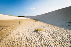 Bewegend duinenpark in Leba Royalty-vrije Stock Foto