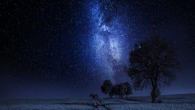 Bewegend melkachtig manier en gebied met bomen bij nacht, timelapse stock footage