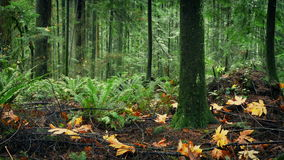 Bewegende Afgelopen Forest With Fall Leaves On-Grond stock footage