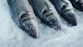 Bewegende afgelopen vissen op ijs stock videobeelden