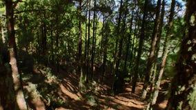 Bewegende pijnbomen op hout 2 stock video