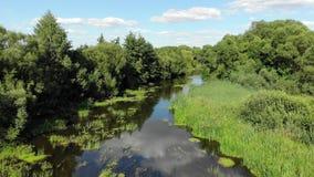 Beweging aan kant over een kleine rivier in de zomer in Rusland stock videobeelden