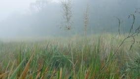 Beweging door gras in nevelige, regenachtige bos Dichte mist in hout stock video