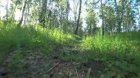 Beweging van de camera laag aan het voetpad stock footage