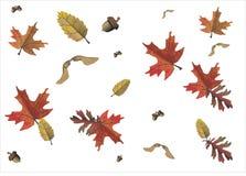 Beweging veroorzakende de herfst, seizoenen Stock Foto