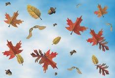 Beweging veroorzakende de herfst, seizoenen Royalty-vrije Stock Afbeelding