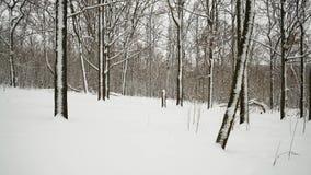 Beweging, Weergeven van de Snow-covered Bomen in het Bos stock footage