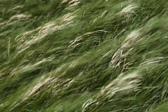 Bewegliche Grasunschärfe Stockfoto