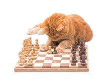 Bewegliche Schachfiguren der Katze der Ingwergetigerten katze sorgfältig Stockbild