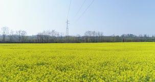 Bewegliche Seite über gelbem Blumenfeld am Sommertag Natur Europas Italien grünes scape Antenne establisher im Freien Brummen 4K stock video footage