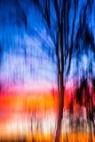 Beweglicher Baumsonnenuntergang des abstrakten Hintergrundes Lizenzfreie Stockbilder
