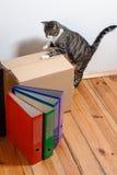 Beweglicher Tag - Katze und Pappschachteln im Raum Stockfotografie