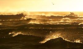 Bewegt Goldenes wellenartig Stockfotos
