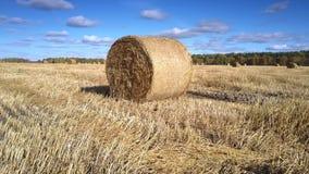 Bewegung um Weizenstrohballen auf Feld gegen Wald stock video