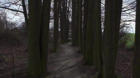 Bewegung unter den Bäumen stock footage
