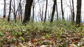 Bewegung zwischen den trockenen Blättern im Wald stock video