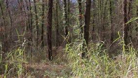 Bewegung zwischen den trockenen Blättern im Wald stock footage