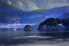 Bewegungsboots-tiefer Bucht-Hafen Vancouver BC Kanada stockfotografie