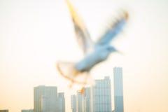 Bewegungsunschärfe der Taube fliegen in die Luft mit den breiten Flügeln Lizenzfreies Stockfoto
