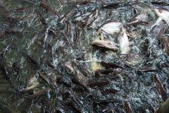 Bewegungsunschärfebild, Bild des schillernden Haifischs Lizenzfreie Stockfotografie
