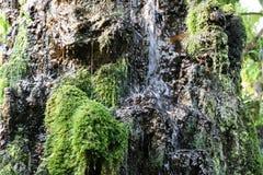Bewegungswasser des Wasserfalls auf dem Felsen mit grünem Moos und Flechte lizenzfreie stockfotos