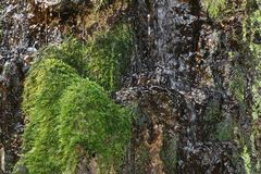 Bewegungswasser des Wasserfalls auf dem Felsen mit grünem Moos und Flechte lizenzfreies stockfoto