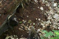 Beweis von Eichhörnchen lizenzfreie stockfotografie