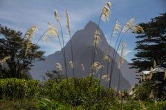 Bewerk Pieksilhouet met tufted grasvoorgrond in verstek, Nieuw Zeeland stock foto's