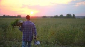Bewerkt de dragende doos van de mensenlandbouwer, mandhoogtepunt van organische groenten, wortelen van opbrengst op hem bij zonso stock footage